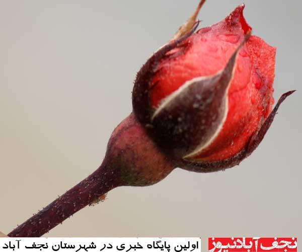 گزارش تصویری از شروع فصل بهار در نجف آباد