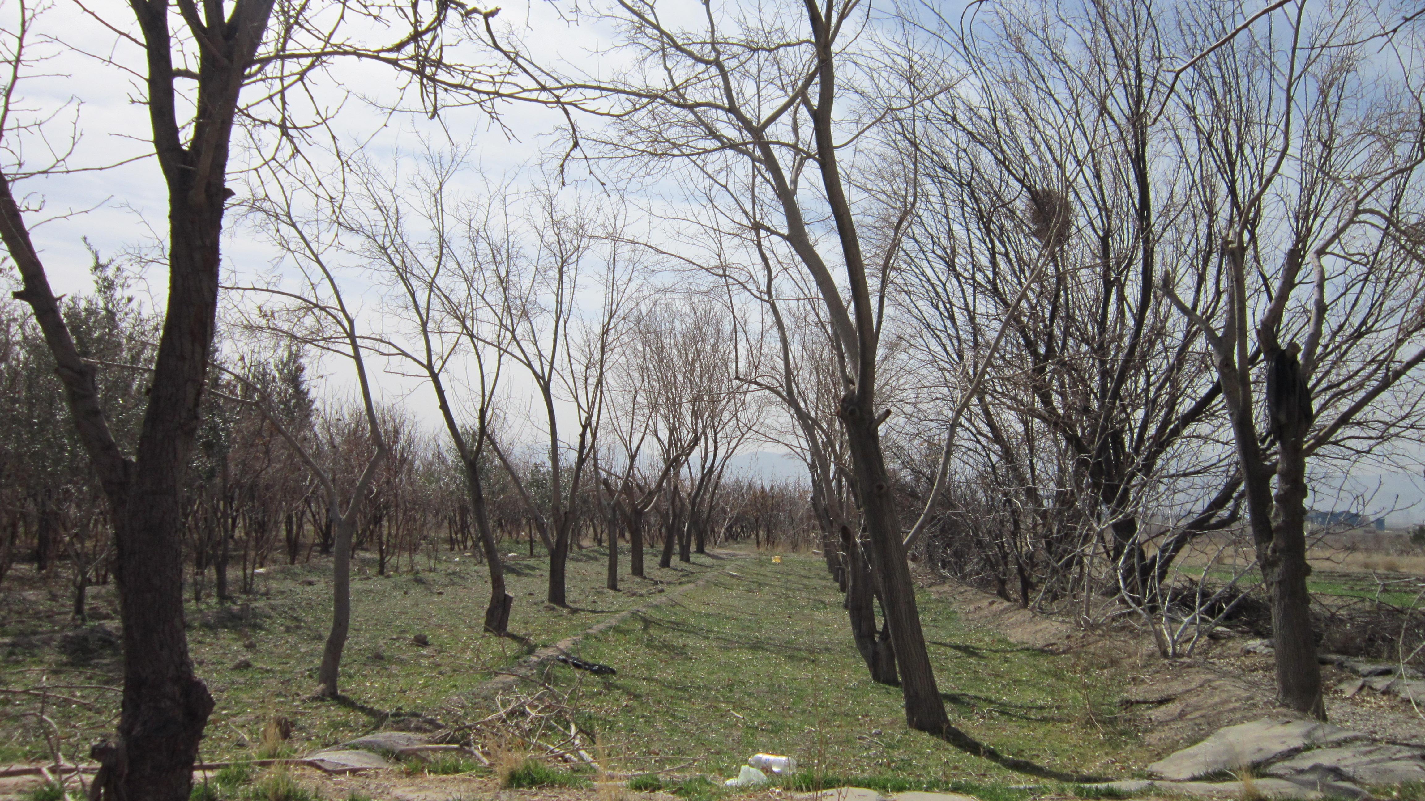 خشکسالی بیش از سیصد هکتار از زمین های کشاورزی نجف آباد را تهدید می کند