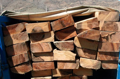 کشف و جمع آوری ۱۵تن چوب بلوط قاچاق در نجف آباد