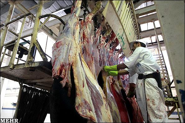 کشتار بیش از ۲۲  هزار تن گوشت طیور و دام در کشتارهای نجف آباد