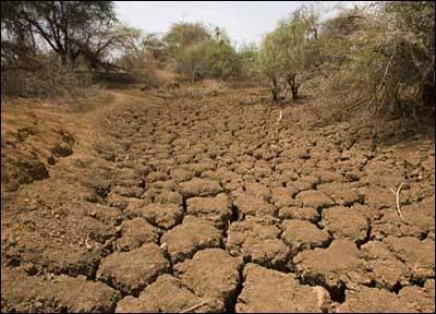 استاد دانشگاه آزاد نجف آباد:۵۰ درصد از کشاورزی شمال اصفهان نابود شده است