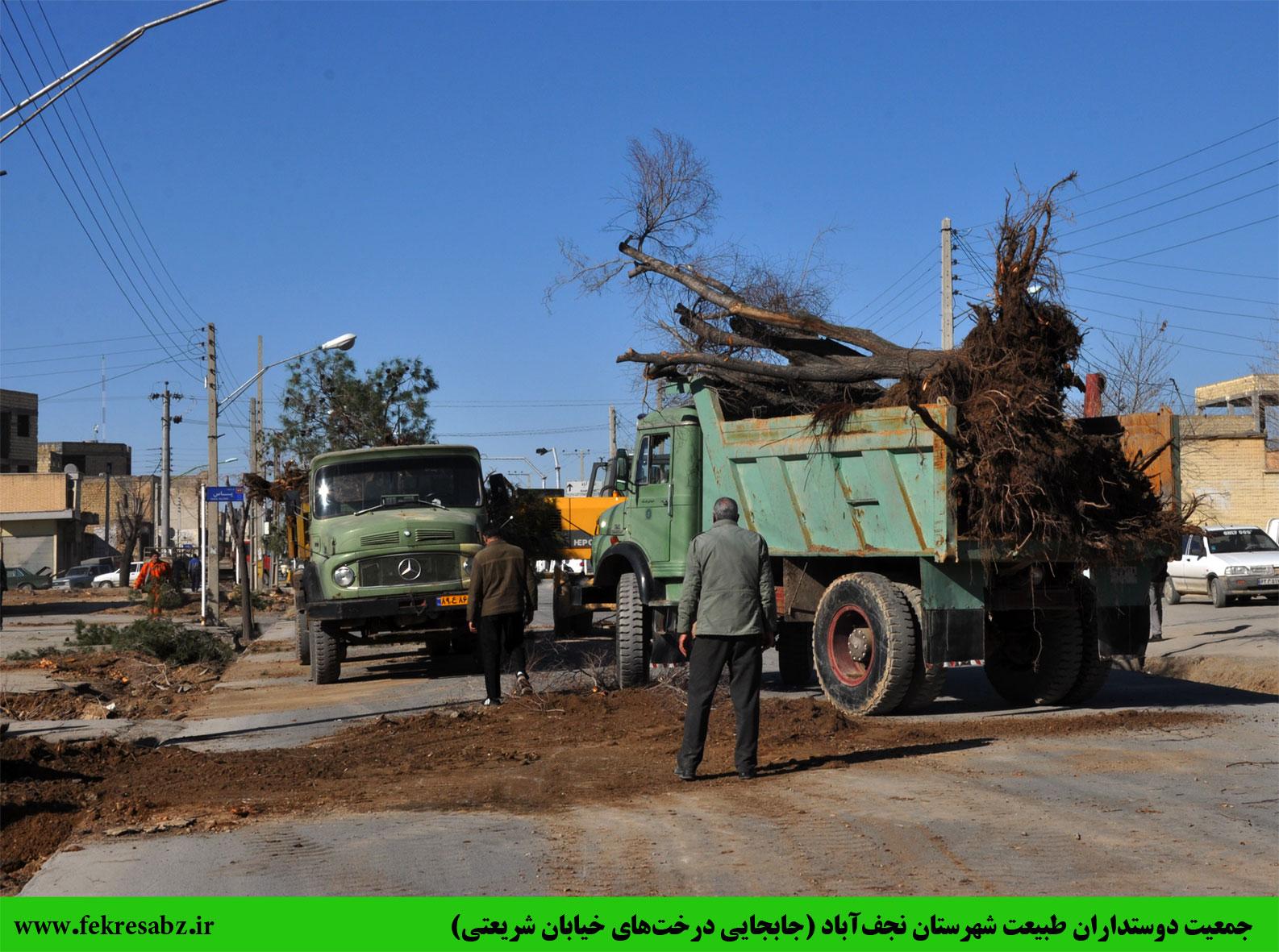 اقدامی کم نظیر در نجف آباد:تراژدی قطع درختان  جایش را با جابه جایی جابه جا کرد