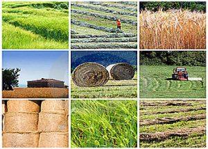 کشاورزی پرداخت ۸۰میلیارد تسهیلات به کشاورزان نجف آباد پرداخت ۸۰میلیارد تسهیلات به کشاورزان نجف آباد               1 300x214
