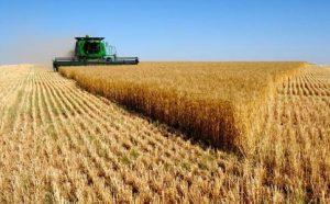کشاورزی توزیع3میلیون لیتر سوخت در نجف آباد و خرید یک میلیارد گندم توزیع3میلیون لیتر سوخت در نجف آباد و خرید یک میلیارد گندم                2 300x186