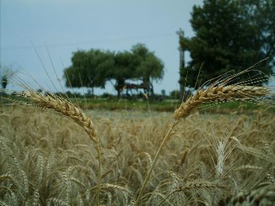 اعلام مهلت برای کشاورزان بدهکار