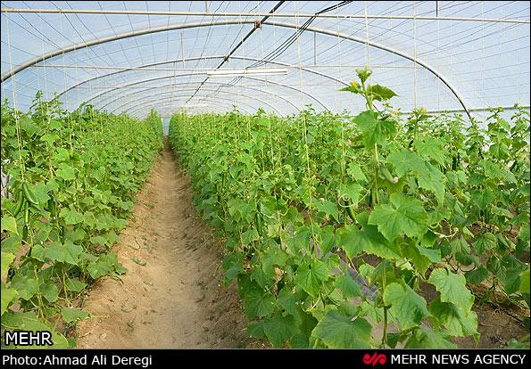 تکمیل پرونده برای ۱۵میلیارد تومان تسهیلات کشاورزی