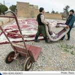 تصاویر شستن صنعتی قالی در نجف آباد                   12 150x150