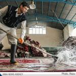تصاویر شستن صنعتی قالی در نجف آباد                   7 150x150