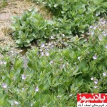 برخورد نظامی چشمه ارمیدک نجف آباد را زخمی کرد+ عکس                      14 150x150