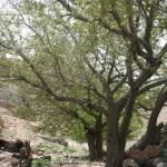 برخورد نظامی چشمه ارمیدک نجف آباد را زخمی کرد+ عکس                      9 150x150