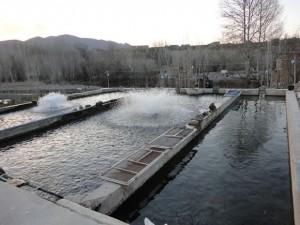 استخر پرورش ماهی پرورش ماهی با آب چاه در نجف آباد+فیلم پرورش ماهی با آب چاه در نجف آباد+فیلم                     300x225