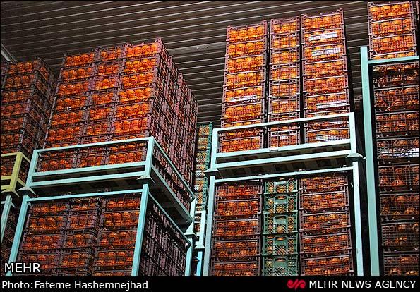 توزیع ۳۷۰ تن میوه عید در نجف آباد