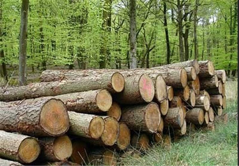 کشف ۱۵ تُن چوب بلوط قاچاق در نجف آباد