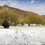 برف نوبرانه نجف آباد+تصویر برف نوبرانه نجف آباد+تصویر        150x150