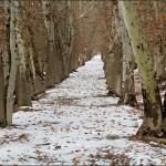 برف نوبرانه نجف آباد+تصویر برف نوبرانه نجف آباد+تصویر        3 150x150