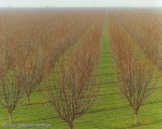 عدم تکرار شیوه جدید مقابله با سرمازدگی درختان
