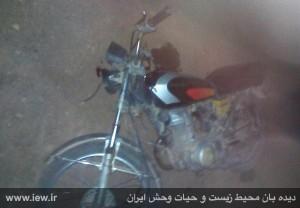 آهو۳ دستگیری قاتل بی رحم آهوی قمیشلو+ تصویر دستگیری قاتل بی رحم آهوی قمیشلو+ تصویر       3 300x208