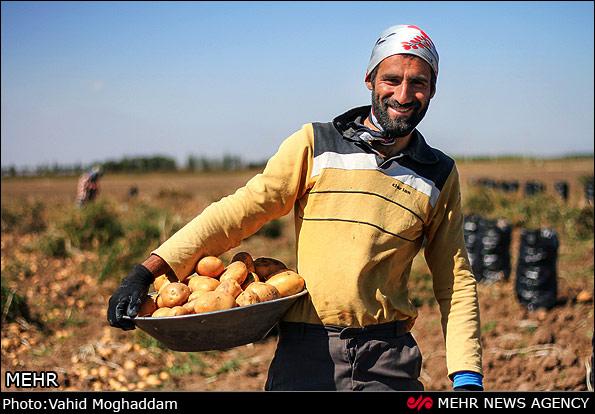 سرمایه گذاری ۱۰۵ میلیارد تومانی فرآوری سیب زمینی در نجف آباد