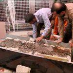 تعویض سنگ مزار شهید حججی+ تصاویر تعویض سنگ مزار شهید حججی+ تصاویر                                              5 150x150