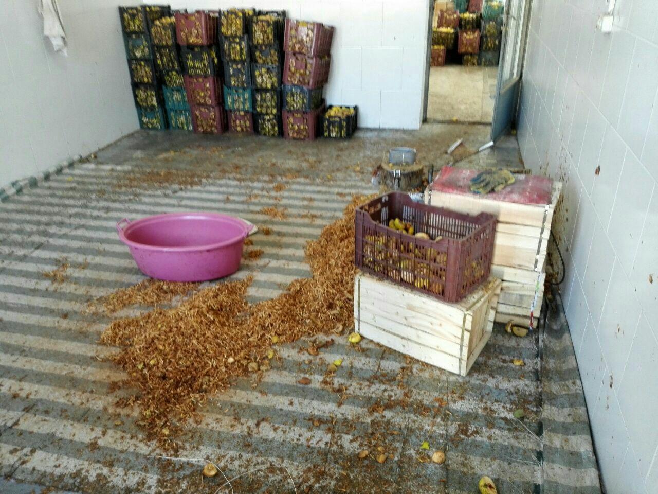 پلمپ کارگاه چای «به» در نجف آباد