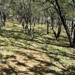 اقامتگاه بومگردی در روستای نهضت آباد+ تصاویر اقامتگاه بومگردی در روستای نهضت آباد+ تصاویر                                                              1 150x150