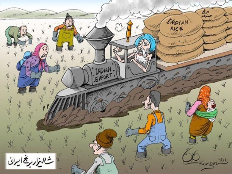 امحای ۱۰۰ تن برنج آلوده در نجف آباد