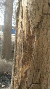 قطع درختان بیشه و پاسخ مسئولان+تصاویر قطع درختان بیشه و پاسخ مسئولان+تصاویر                       169x300