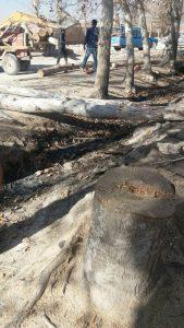 قطع درختان بیشه (3)                              3 169x300