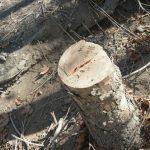 قطع درختان بیشه و پاسخ مسئولان+تصاویر قطع درختان بیشه و پاسخ مسئولان+تصاویر                              5 150x150