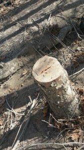 قطع درختان بیشه (5)                              5 169x300