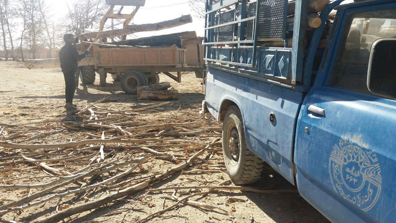 قطع درختان بیشه و پاسخ مسئولان+تصاویر