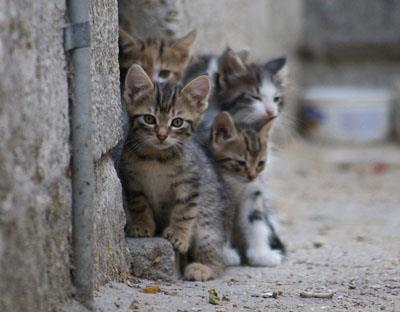 اعزام گربه های نجف آباد به جبهه