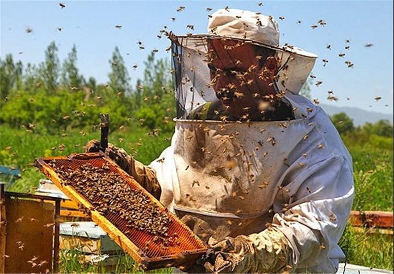 تولید ۴۰درصد عسل استان در نجف آباد