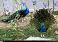 باغ پرندگان نجف آباد+ فیلم