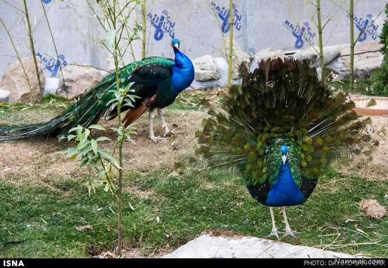 باغ پرندگان نجف آباد+فیلم