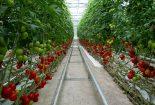 سرمایه لازم ساخت گلخانه  سرمایه لازم ساخت گلخانه 118327l 155x105
