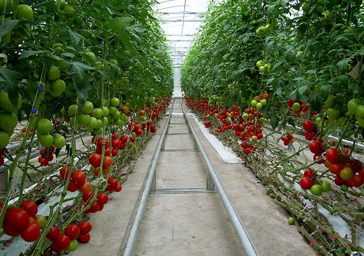 سرمایه لازم ساخت گلخانه سرمایه لازم ساخت گلخانه سرمایه لازم ساخت گلخانه 118327l