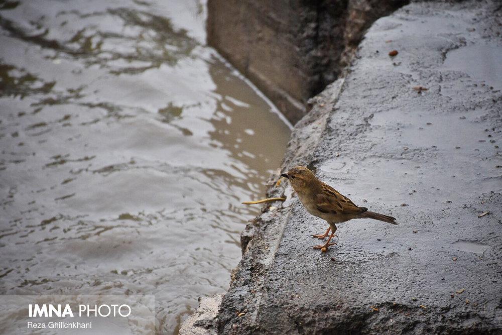 بارش باران در نجف آباد روز بارانی نجف آباد+تصاویر روز بارانی نجف آباد+تصاویر                                          11