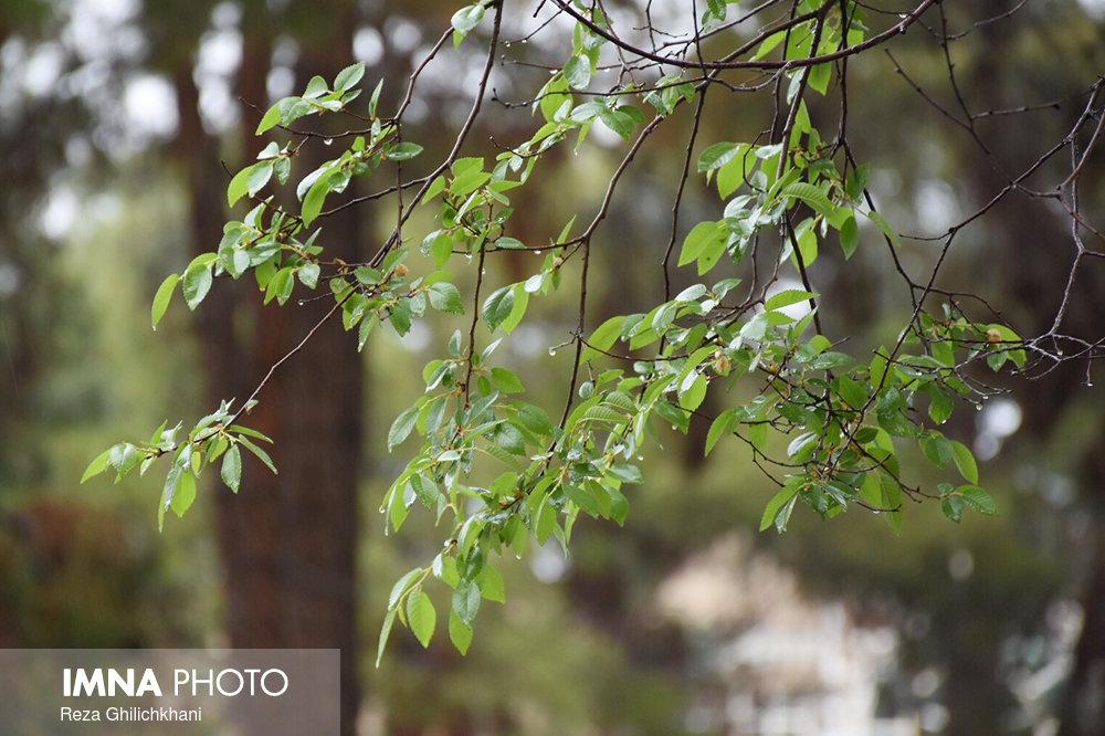 بارش باران در نجف آباد روز بارانی نجف آباد+تصاویر روز بارانی نجف آباد+تصاویر                                          8