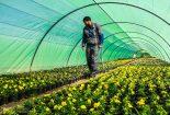 احداث گلخانه ۱میلیاردی در نجف آباد