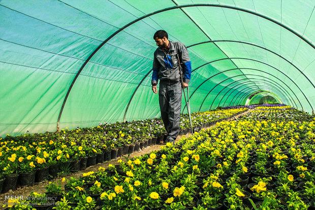 امکان کنترل بیولوژیک آفات در نجف آباد
