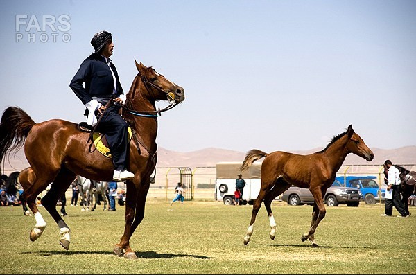 جشنواره ملی اسب در نجف آباد