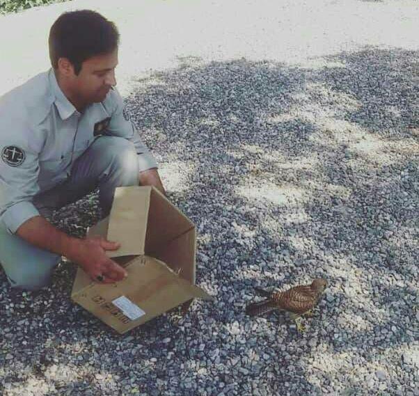 رها سازی پرنده شکاری در نجف آباد رها سازی پرنده شکاری در نجف آباد رها سازی پرنده شکاری در نجف آباد