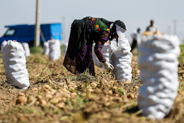 اشک و آه کشاورزان از بی تدبیری مسئولان+فیلم