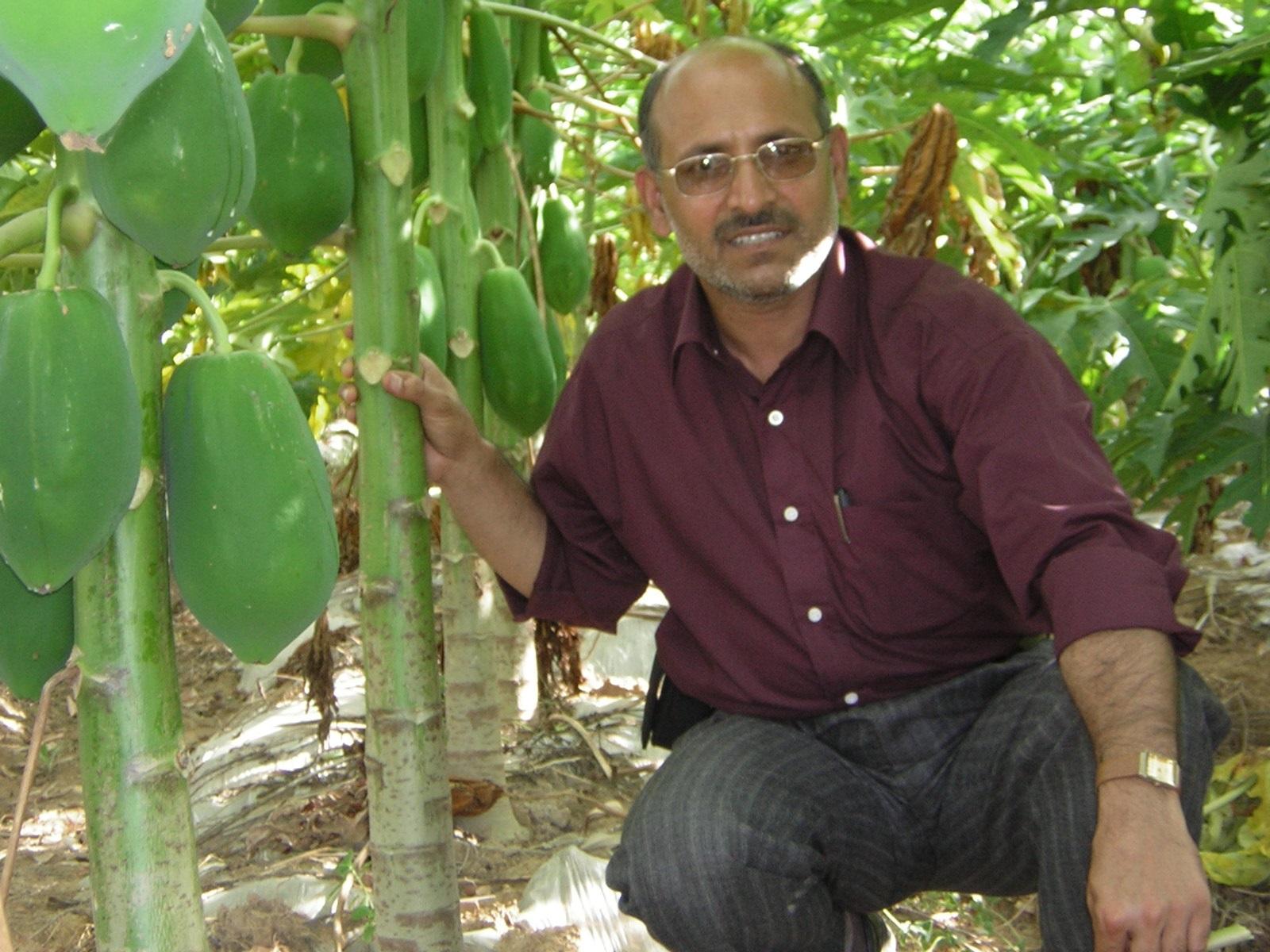 میوه ی گرمسیری پاپایا(خربزه درختی) گنجی پنهان