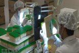 تولید ۹۰میلیون لوله خونگیری در نجف آباد+ تصاویر و فیلم