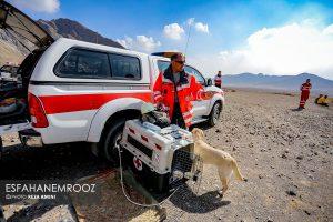 تمرین سگ های زنده یاب ایرانی و آلمانی در محدوده معدن سورمه نجف آباد مانور سگ های زنده یاب آلمانی در نجف آباد+تصاویر مانور سگ های زنده یاب آلمانی در نجف آباد+تصاویر                                                                     1 300x200