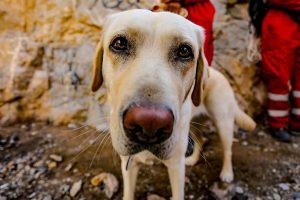 تمرین سگ های زنده یاب ایرانی و آلمانی در محدوده معدن سورمه نجف آباد مانور سگ های زنده یاب آلمانی در نجف آباد+تصاویر مانور سگ های زنده یاب آلمانی در نجف آباد+تصاویر                                                                     12 300x200