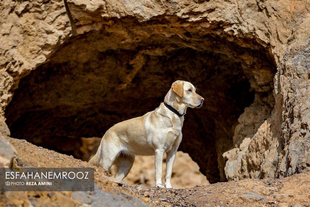 تمرین سگ های زنده یاب ایرانی و آلمانی در محدوده معدن سورمه نجف آباد راه اندازی معدن سورمه نجف آباد توسط ۲برادر+تصاویر راه اندازی معدن سورمه نجف آباد توسط ۲برادر+تصاویر                                                                     20 1024x683