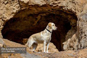 تمرین سگ های زنده یاب ایرانی و آلمانی در محدوده معدن سورمه نجف آباد مانور سگ های زنده یاب آلمانی در نجف آباد+تصاویر مانور سگ های زنده یاب آلمانی در نجف آباد+تصاویر                                                                     20 300x200